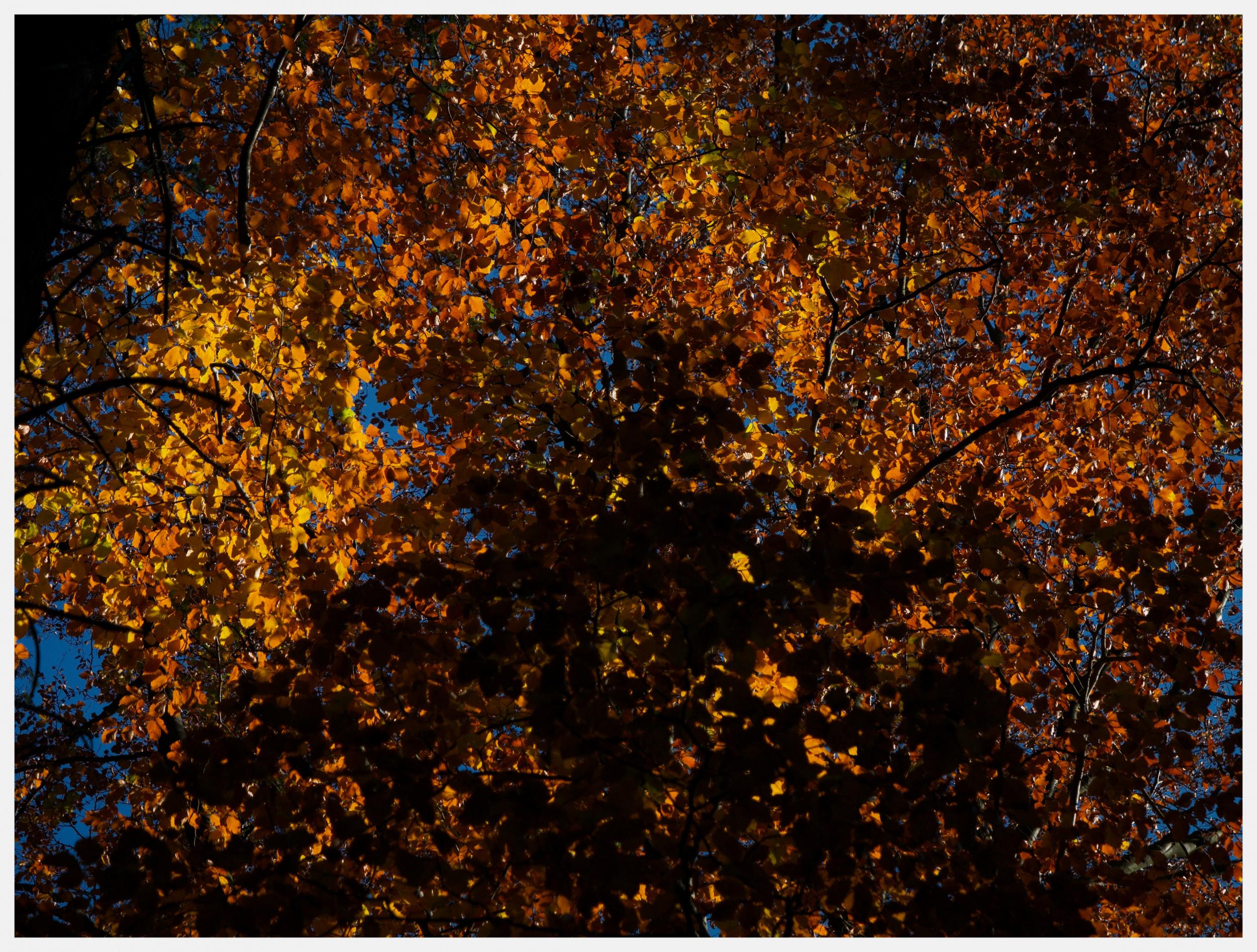 Klicken Sie auf die Grafik für eine größere Ansicht  Name:Das Goldene Blätterdach.jpg Hits:107 Größe:2,80 MB ID:1017070
