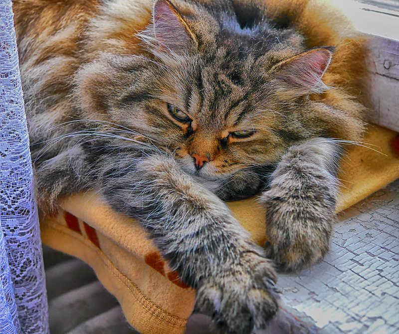 Kitty_websmall.jpg