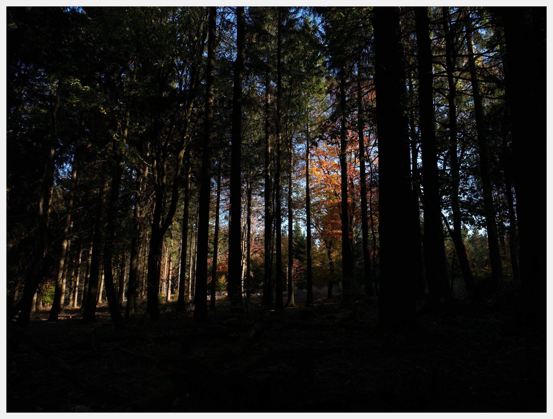Klicken Sie auf die Grafik für eine größere Ansicht  Name:Schau aus dem Wald heraus.jpg Hits:107 Größe:2,44 MB ID:1017075
