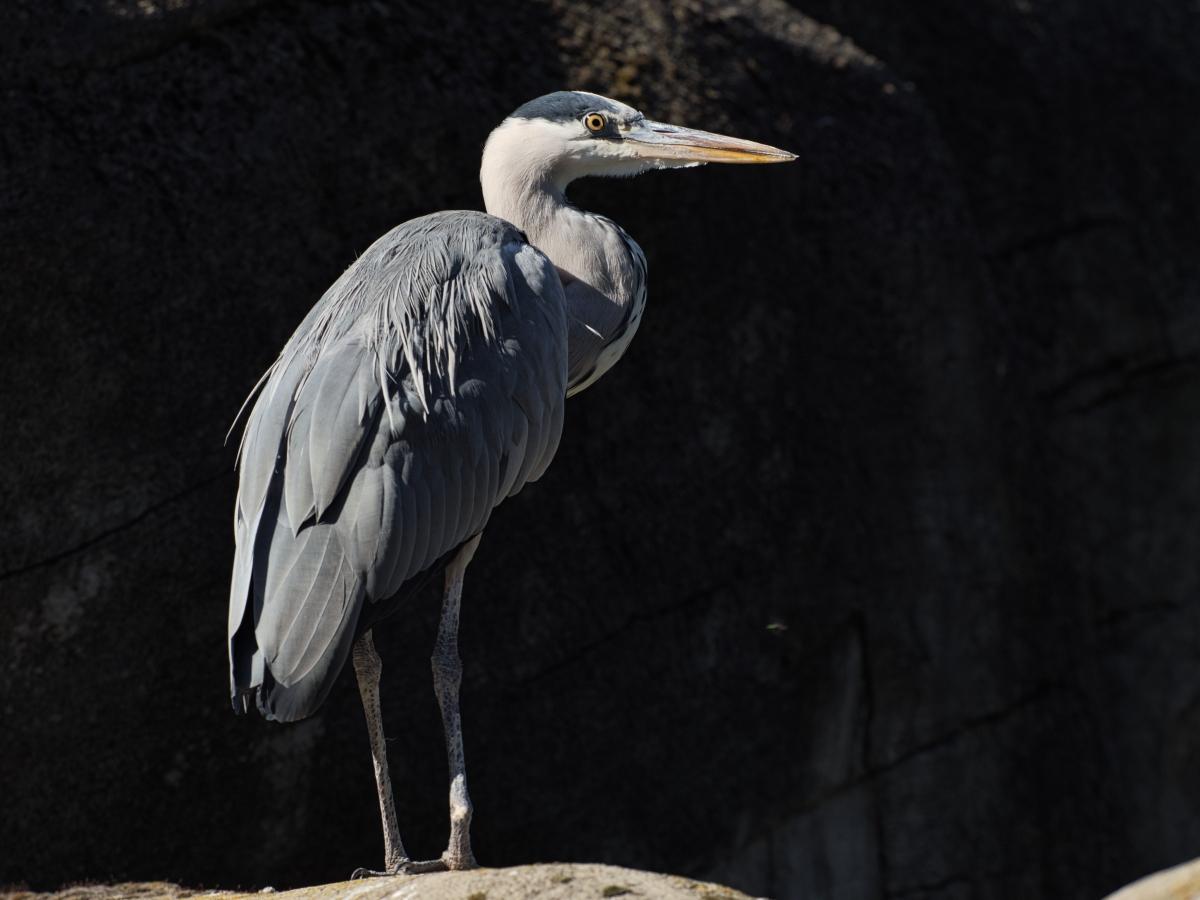 Klicken Sie auf die Grafik für eine größere Ansicht  Name:Zoo KA2019_083.jpg Hits:127 Größe:443,9 KB ID:1059749