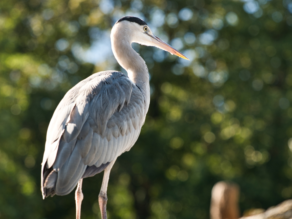 Klicken Sie auf die Grafik für eine größere Ansicht  Name:Zoo KA2019_094.jpg Hits:130 Größe:492,2 KB ID:1059750