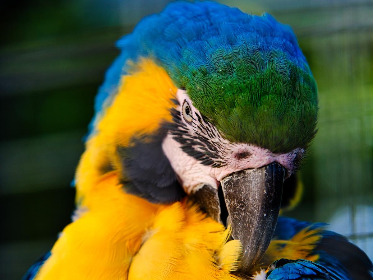 Klicken Sie auf die Grafik für eine größere Ansicht  Name:Zoo KA2019_265.jpg Hits:127 Größe:649,5 KB ID:1059755