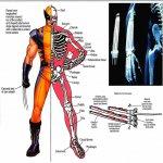Wolverine-Adamantium.jpg