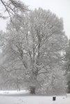Winter 15 small.jpg