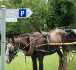 Horseparking.jpg
