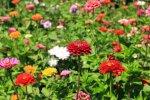 Blumen_2016.jpg