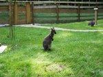Känguru.jpg